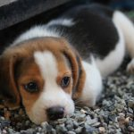 En söt hundvalp