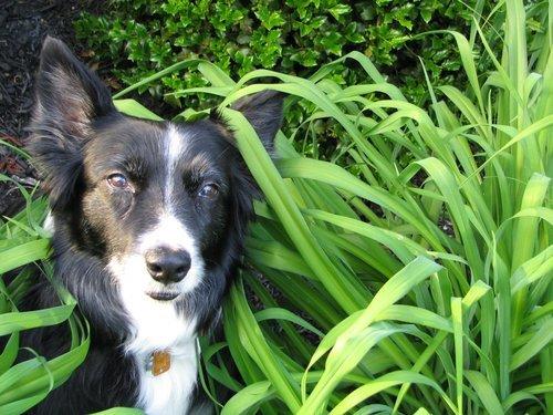 Vad kostar hundtillbehör?